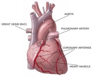 Keadaan jantung yang sehat